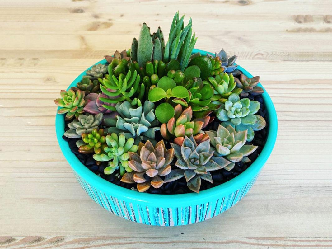 Feature-Bernas-Succulant-Garden